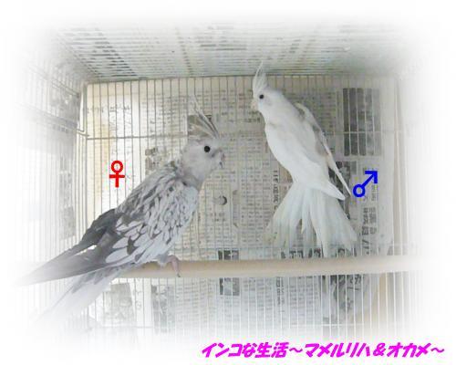 P1110180_convert_20140409154412.jpg