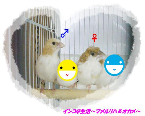 P1110181_convert_20140409181226.jpg