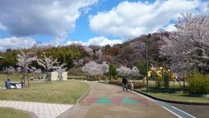 6日桜山公園