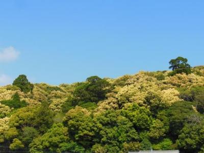 高倉山と巨木さん