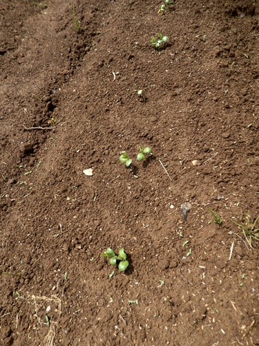 2014.5.24 春の種蒔き 012 (5)