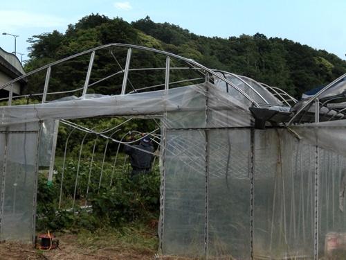 2014.5.29 そらまめ収穫 023 (1)