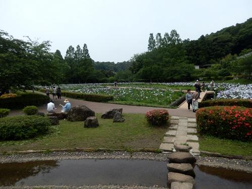 2014.6.10 袖ヶ浦公園のあやめ園 040