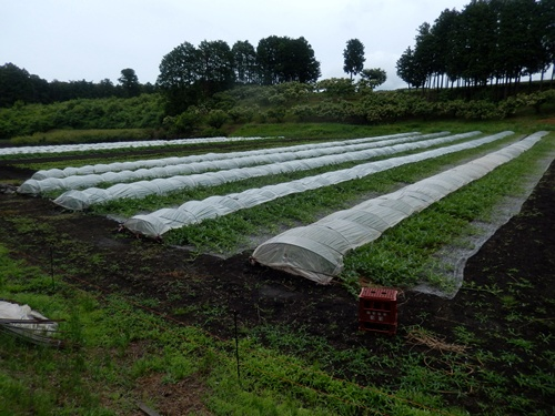 2014.6.25 高倉(古籐田家)の野菜畑 096 (5)