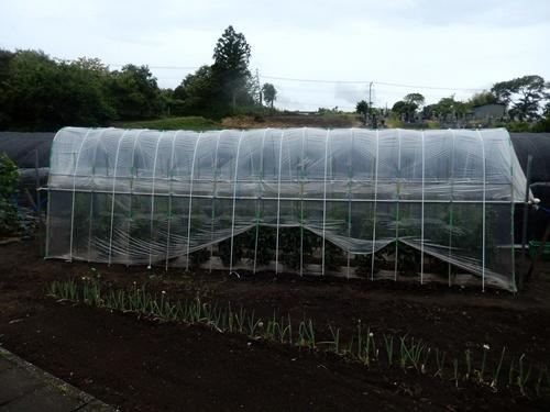 2014.6.25 高倉(古籐田家)の野菜畑 096 (2)