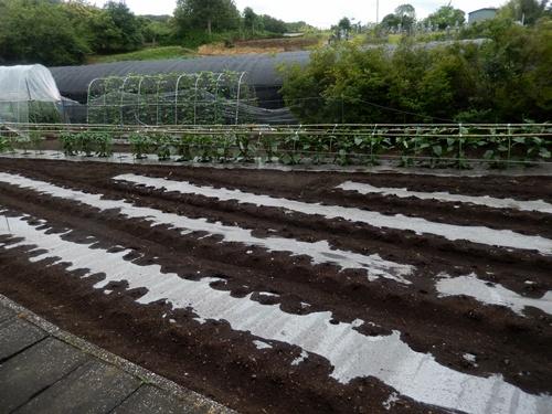 2014.6.25 高倉(古籐田家)の野菜畑 096 (1)