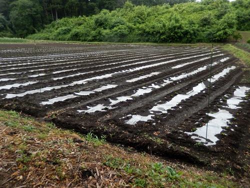 2014.6.25 高倉(古籐田家)の野菜畑 096 (9)