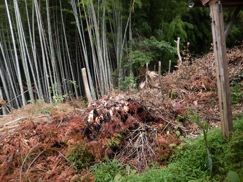 2014.7.24 竹の山 005 (1)