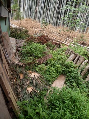 2014.7.24 竹の山 005