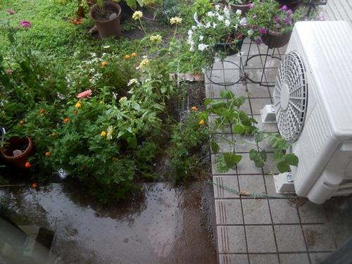 2014.8.23 雨の風景 020