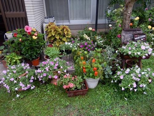 2014.8.29 雨後の野菜。草花 017 (1)