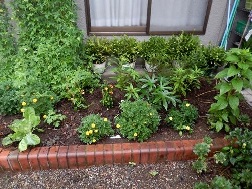 2014.8.29 雨後の野菜。草花 017 (2)