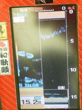 P1130502.jpg
