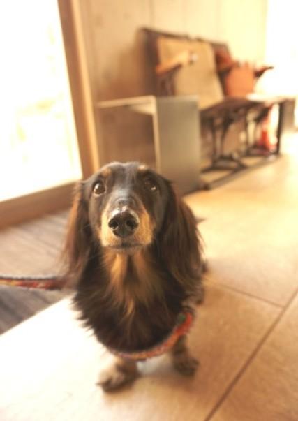 犬塾とMISHIN (3)