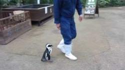 恋するペンギン
