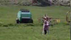 少女と子馬の動画