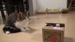 catポチッと押したら猫が出る