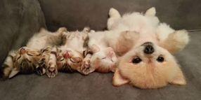 子猫と子犬のおやすみ動画