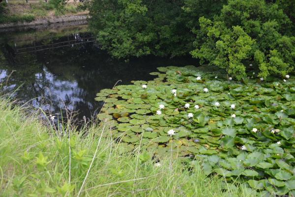 13瑠璃宝の池