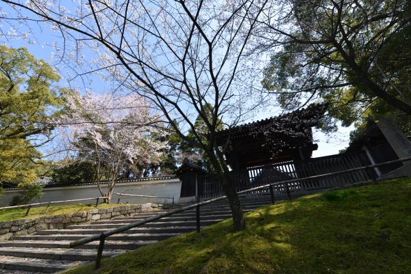 四脚門の桜