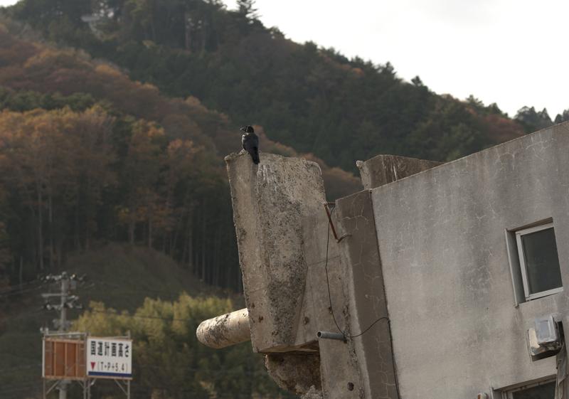 女川_2012.11.24_14