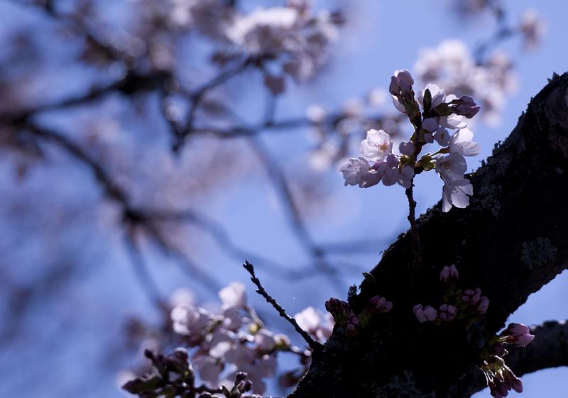 富岡・夜ノ森_2014.4.5_1