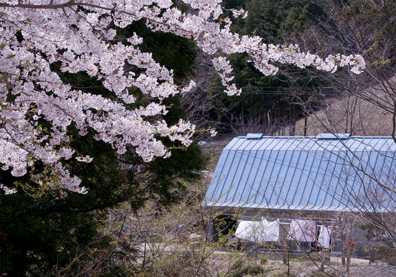 川内_2014/04/27_1