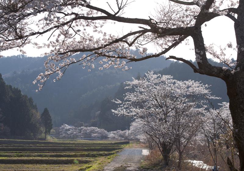 楢葉・金剛川_2014.4.8_7