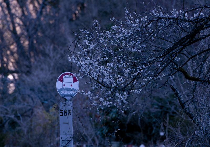 川内・五枚沢桜_2014.04.05_2