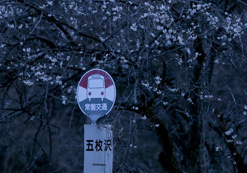 川内・五枚沢桜_2014.04.05_4