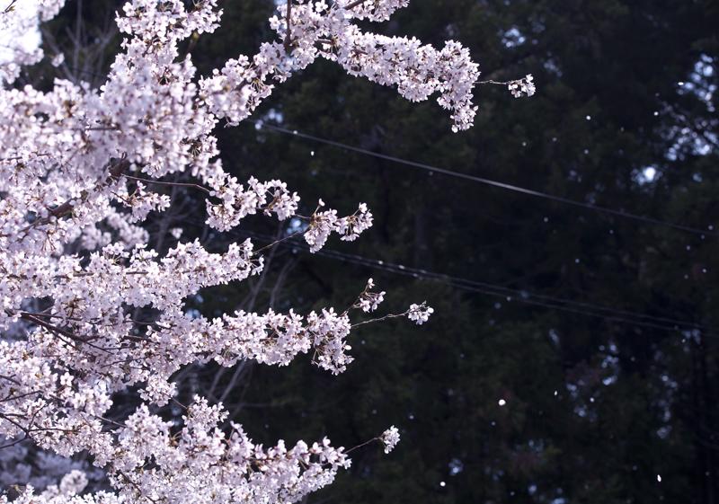 富岡・麓山神社_2014.4.12_2