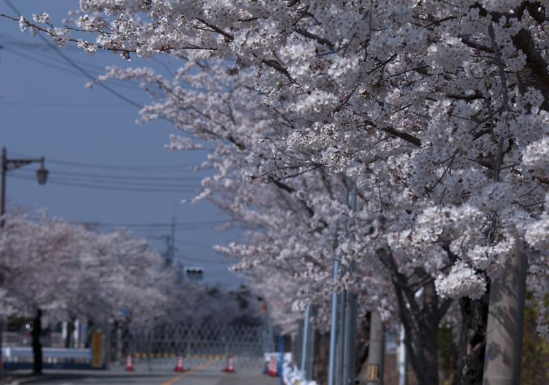 富岡・夜ノ森_2014.4.8_2