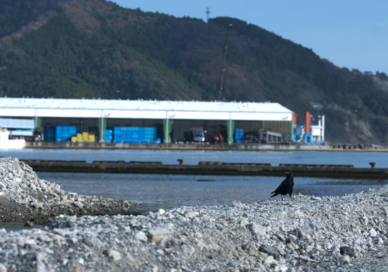 女川_2012.11.24_36