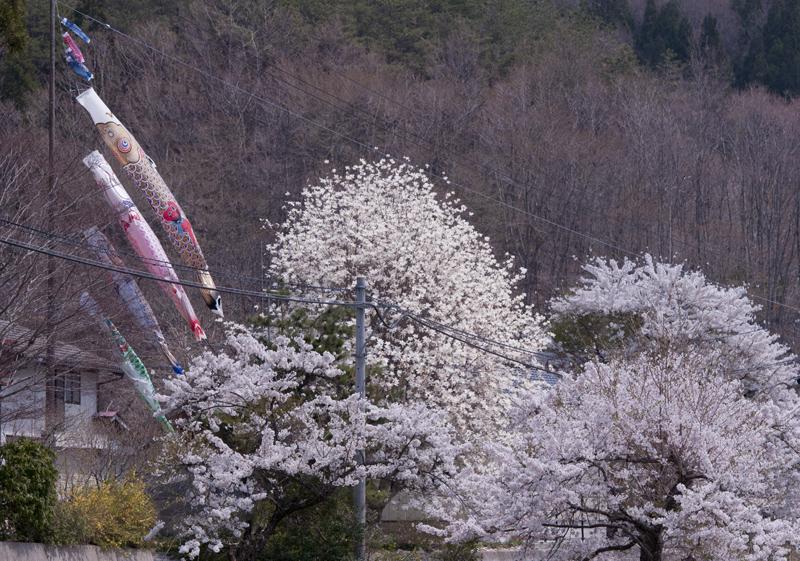 川内_2014/04/27_3
