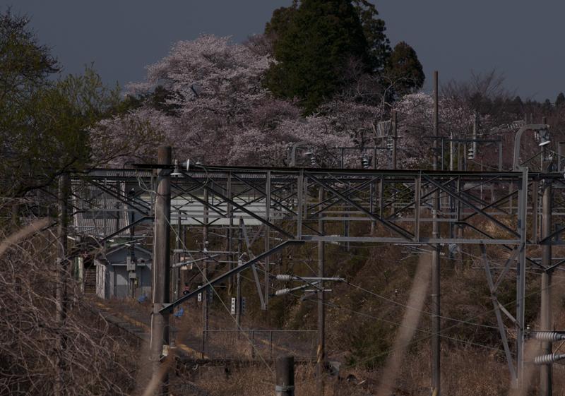 富岡・夜ノ森駅_2014.4.8_3