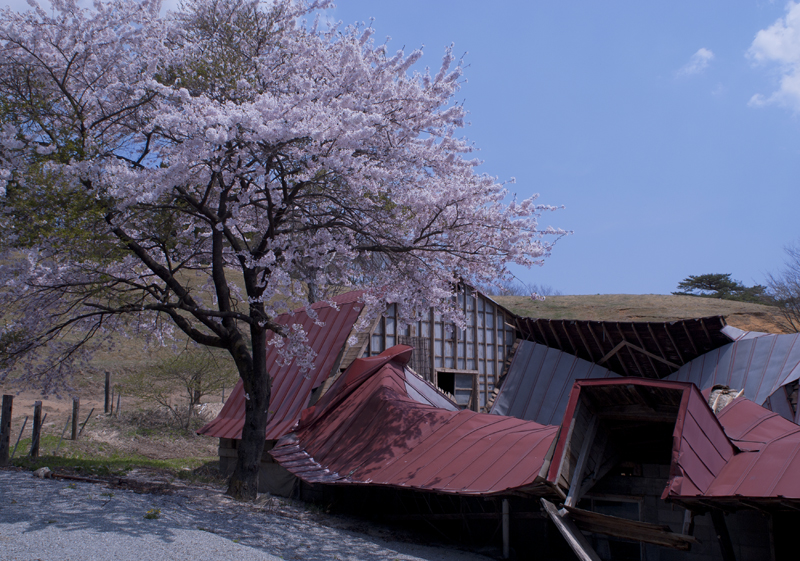 川内_草野牧場_4