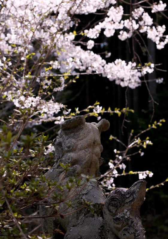 富岡・麓山神社_2014.4.12_5
