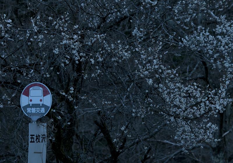 川内・五枚沢_2014.4.5_5