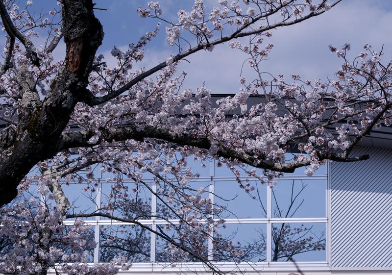 富岡・小中学校_2014.4.8_5