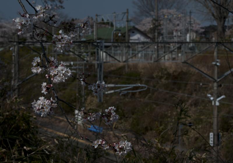 富岡・夜ノ森駅_2014.4.8_5