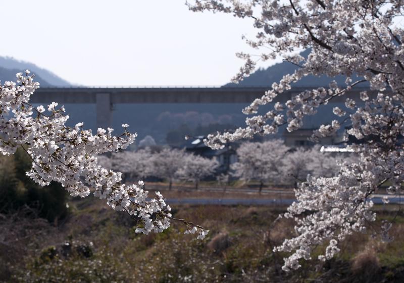 楢葉・大谷_2014.4.8_5