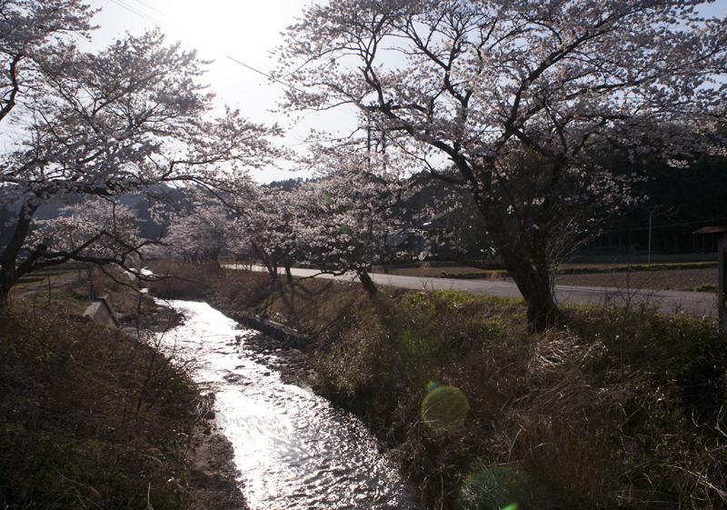 楢葉・金剛川_2014.4.8_6