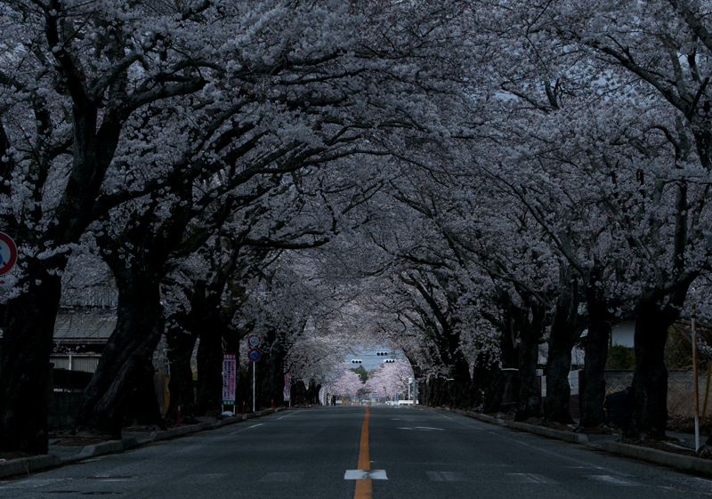 富岡・夜ノ森_2014.4.8_6