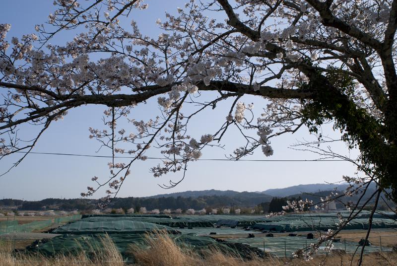 楢葉・大谷_2014.4.8_7