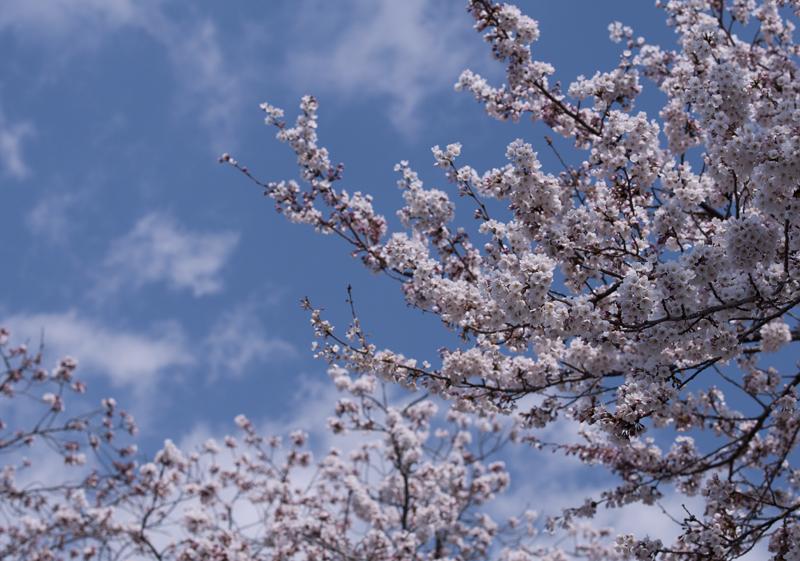富岡・夜ノ森_2014.4.8_7