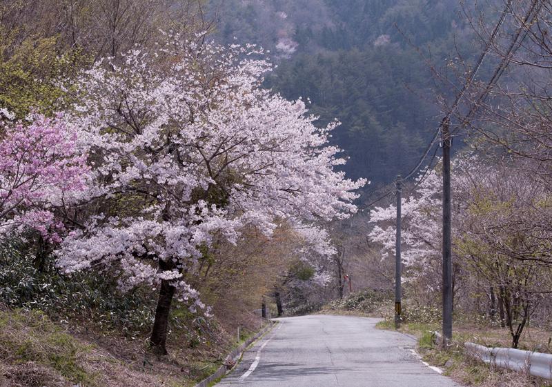 川内_2014/04/27_7