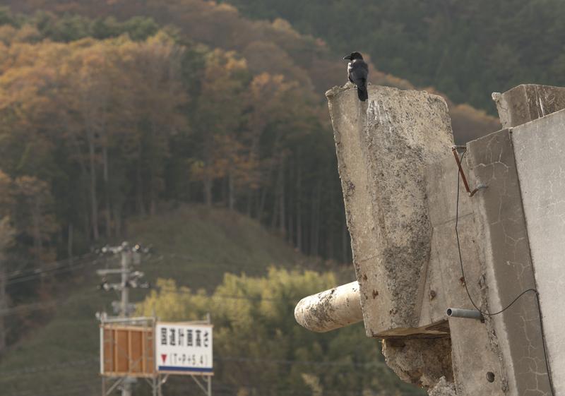 女川_2012.11.24_8