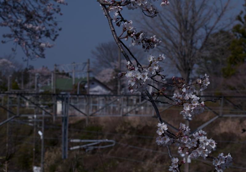 富岡・夜ノ森駅_2014.4.8_8