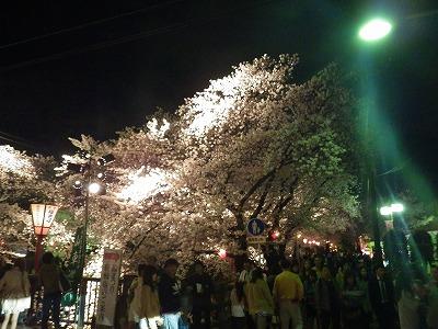 2014五条川夜桜 (2)