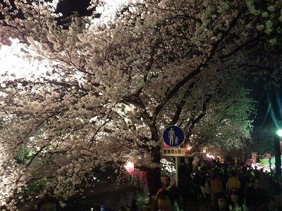 2014五条川夜桜 (3)